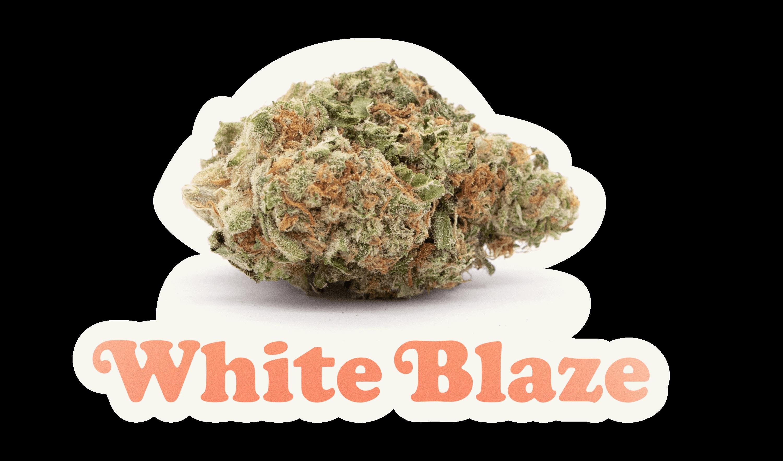 wildlife-cannabis-white-blaze
